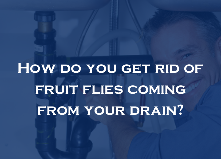 How do you get rid of fruit flies coming from your drain?